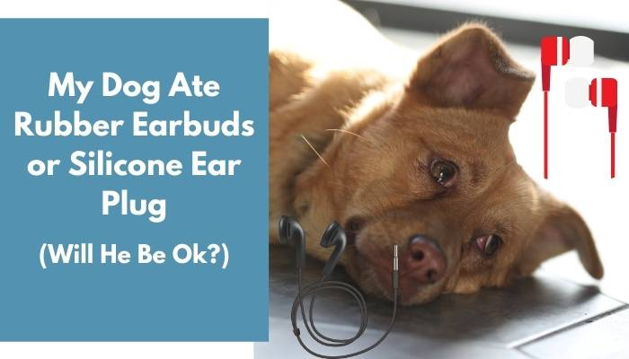 My Dog Ate Rubber Earbuds or Silicone Ear Plug