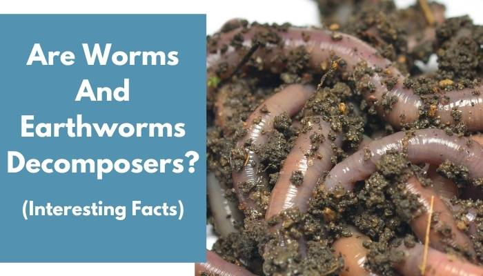 Are Worms And Earthworms Decomposers