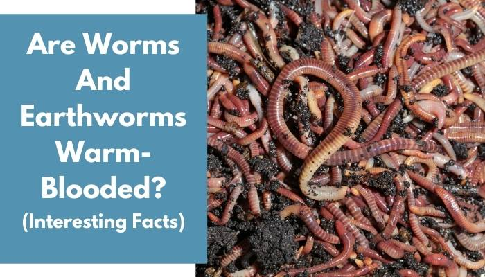 Are Worms And Earthworms Warm-Blooded