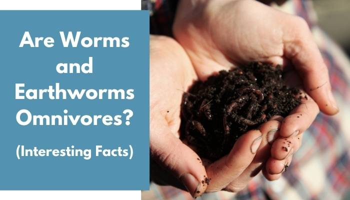 Are Worms and Earthworms Omnivores