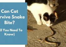 Can Cat Survive Snake Bite? (All You Need To Know – Urgent)