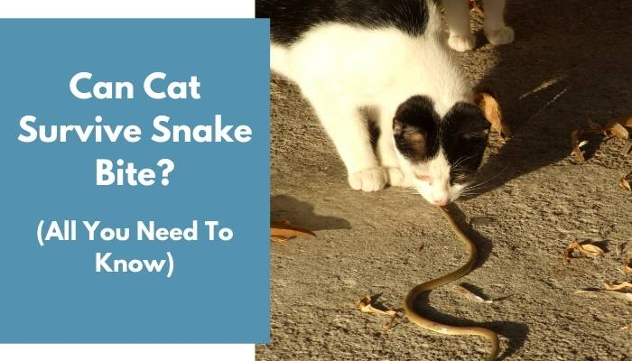 Can Cat Survive Snake Bite