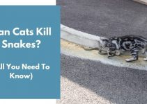 Can Cats Kill Snakes? (And Keep Them Away?)