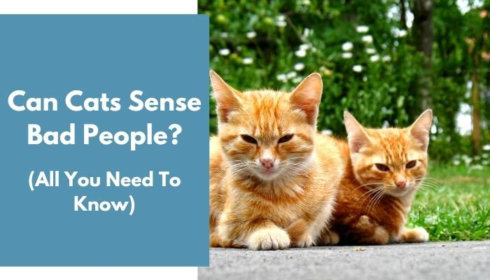 Can Cats Sense Bad People