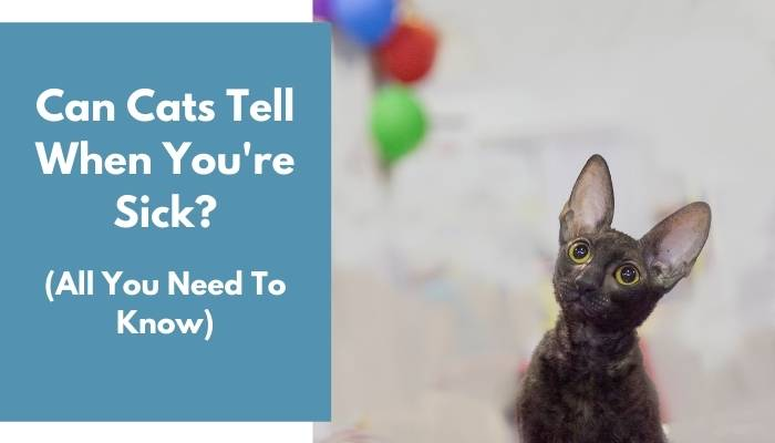 Can Cats Tell When You're Sick