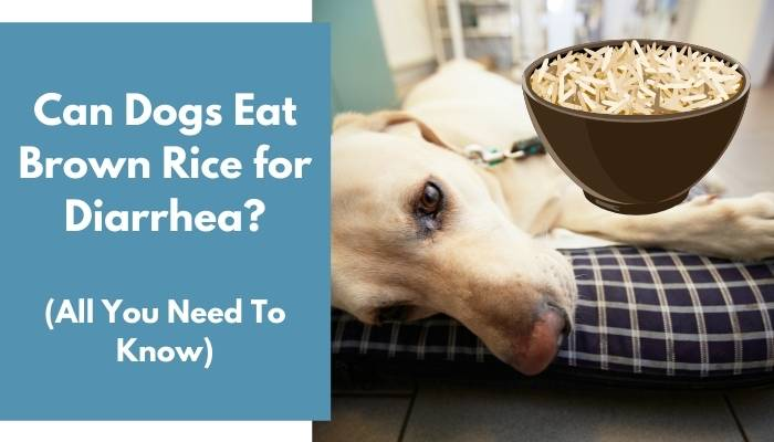Can Dogs Eat Brown Rice for Diarrhea