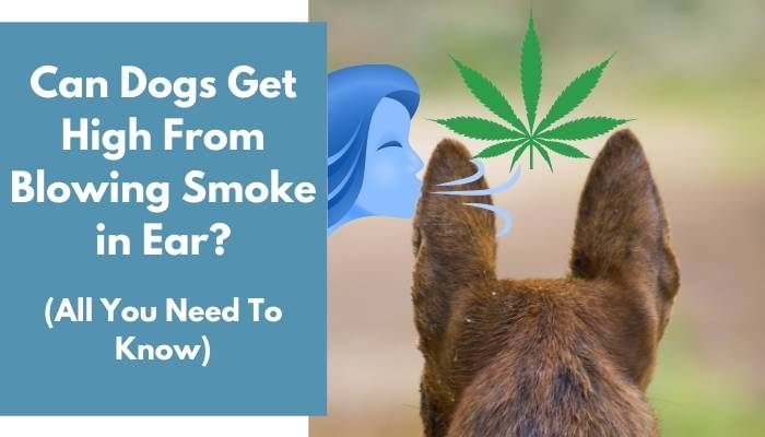 Can Dogs Get High From Blowing Smoke in Ear