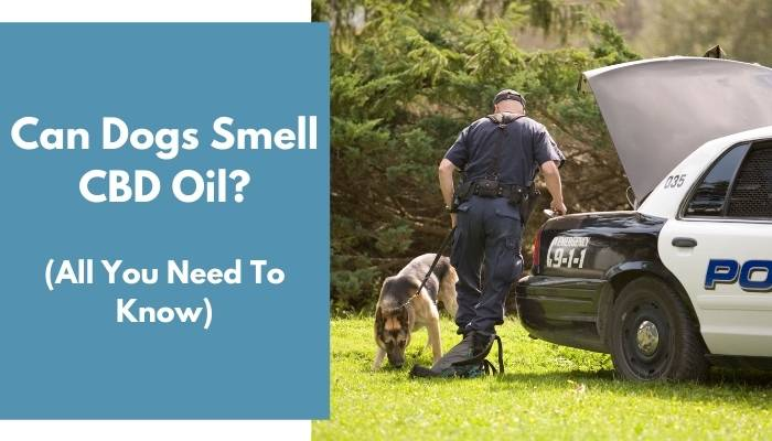 Can Dogs Smell CBD Oil