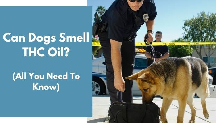 Can Dogs Smell THC Oil
