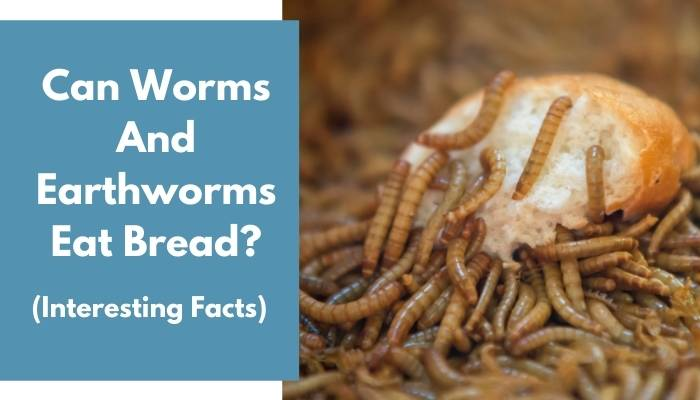 Can Worms And Earthworms Eat Bread
