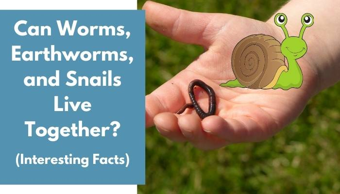 Can Worms, Earthworms, and Snails Live Together