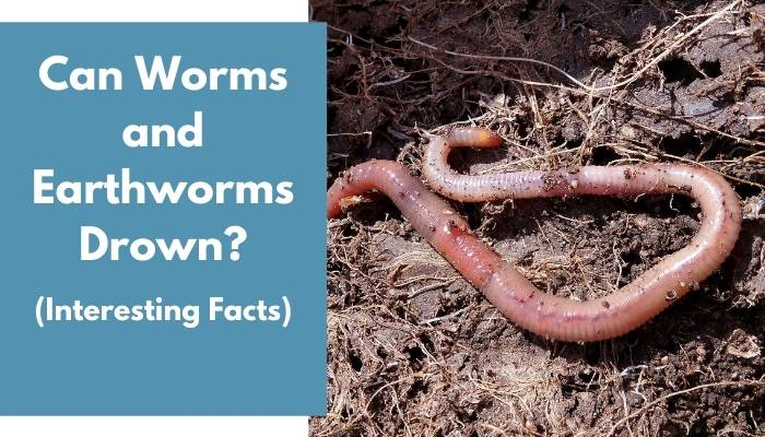 Can Worms and Earthworms Drown