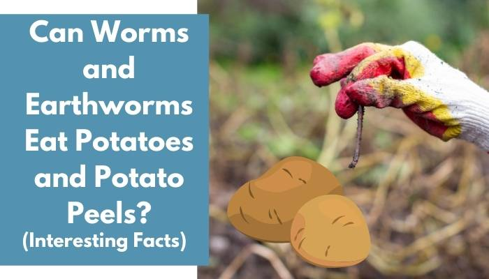 Can Worms and Earthworms Eat Potatoes and Potato Peels