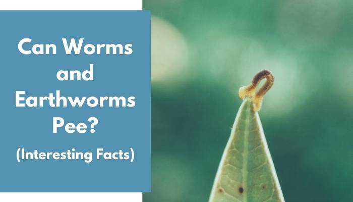 Can Worms and Earthworms Pee