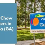 Chow Chow Breeders in Georgia (GA)