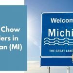 Chow Chow Breeders in Michigan (MI)