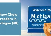 Chow Chow Breeders in Michigan (MI) | Chow Chow Puppies for Sale
