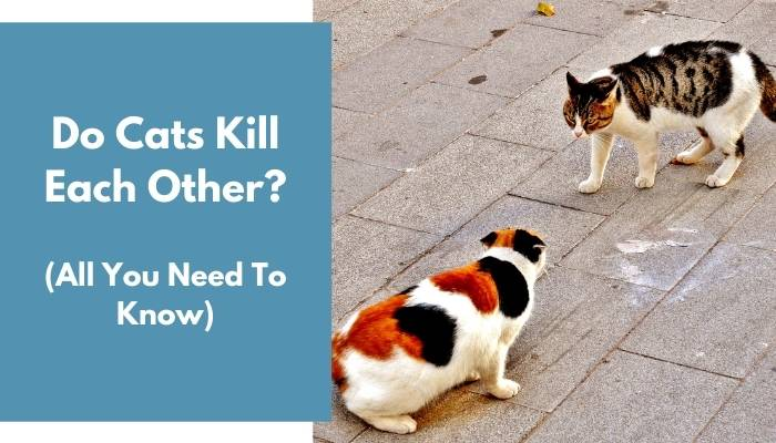 Do Cats Kill Each Other