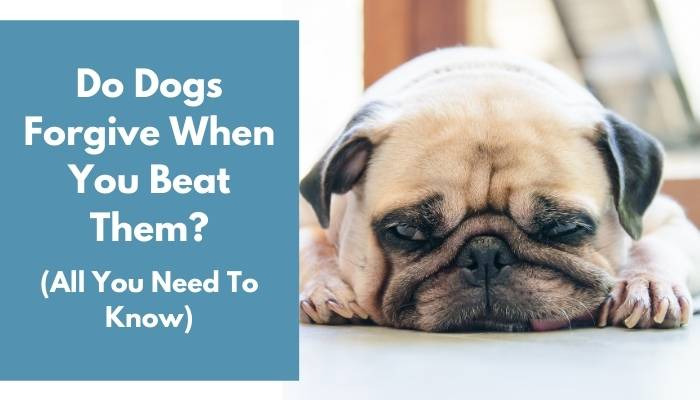 Do Dogs Forgive When You Beat Them