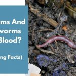 Do Worms And Earthworms Have Blood