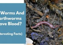 Do Worms And Earthworms Have Blood? (Interesting Facts)