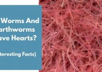 Do Worms And Earthworms Have Hearts? (Interesting Facts)