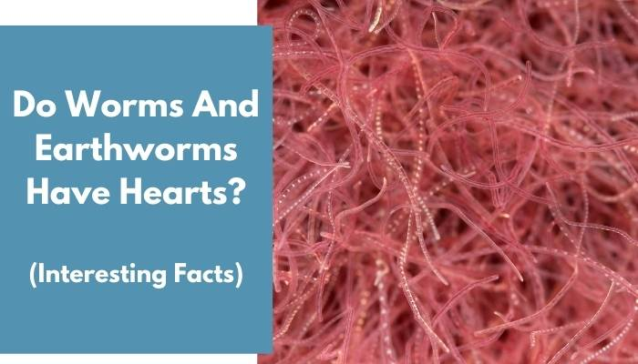 Do Worms And Earthworms Have Hearts