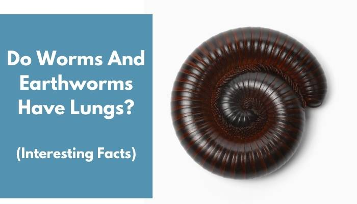 Do Worms And Earthworms Have Lungs