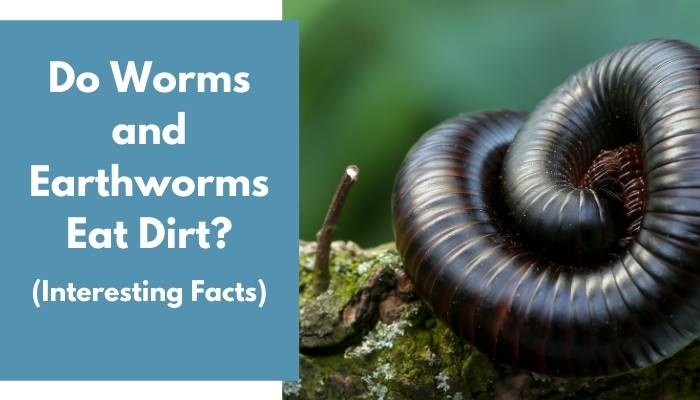 Do Worms and Earthworms Eat Dirt