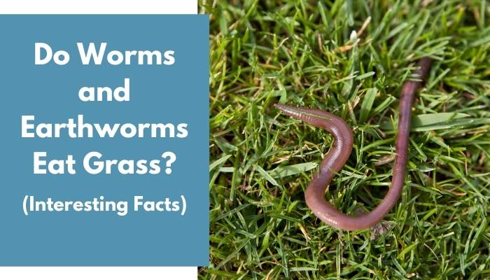 Do Worms and Earthworms Eat Grass