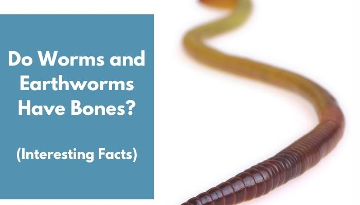 Do Worms and Earthworms Have Bones