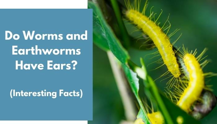 Do Worms and Earthworms Have Ears