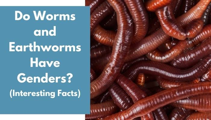 Do Worms and Earthworms Have Genders