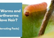 Do Worms and Earthworms Have Hair? (Interesting Facts)