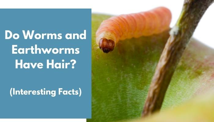 Do Worms and Earthworms Have Hair