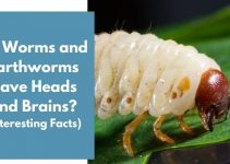 Do Worms and Earthworms Have Heads and Brains? (8 Facts)
