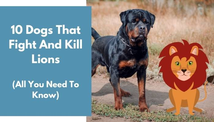Dogs That Fight And Kill Lions