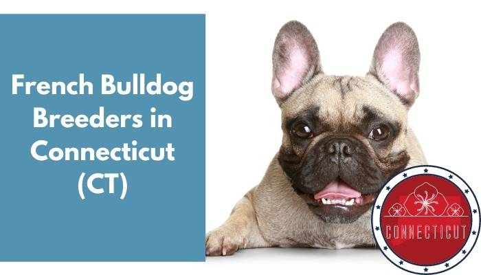 French Bulldog Breeders in Connecticut CT