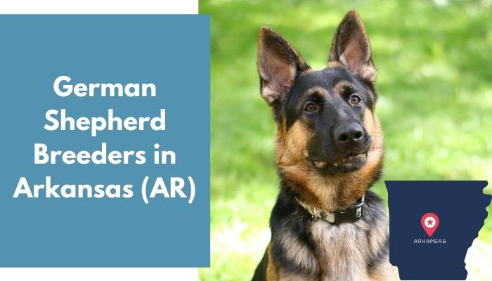 German Shepherd Breeders in Arkansas AR