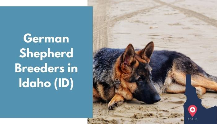 German Shepherd Breeders in Idaho ID