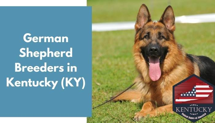 German Shepherd Breeders in Kentucky KY