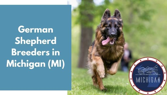 German Shepherd Breeders in Michigan MI