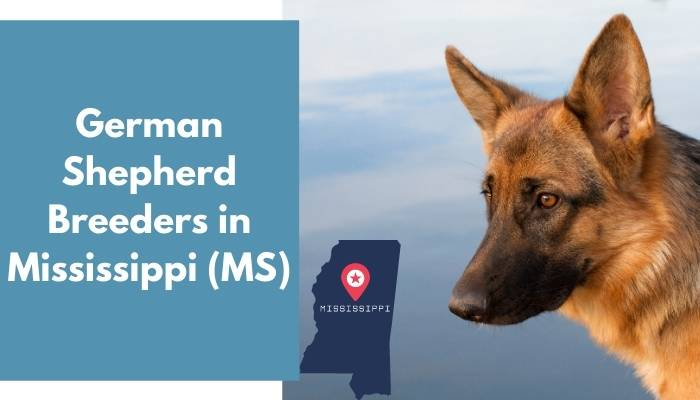 German Shepherd Breeders in Mississippi MS