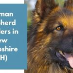 German Shepherd Breeders in New Hampshire NH