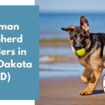 German Shepherd Breeders in North Dakota ND