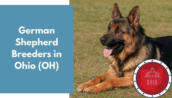 German Shepherd Breeders in Ohio OH