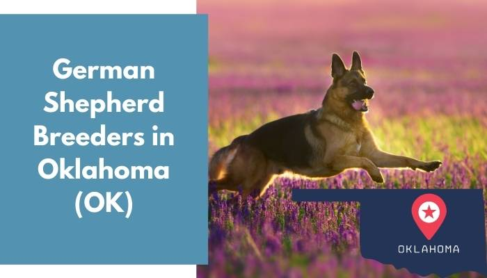 German Shepherd Breeders in Oklahoma OK