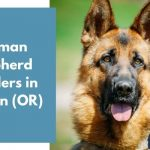 German Shepherd Breeders in Oregon OR
