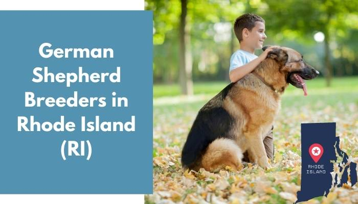 German Shepherd Breeders in Rhode Island RI