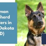 German Shepherd Breeders in South Dakota SD